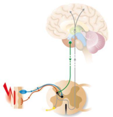 conexiones síndrome sensibilización central