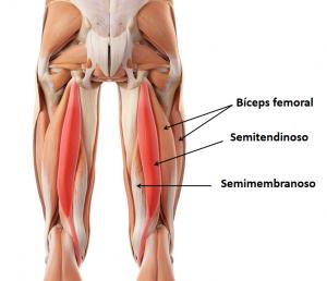 lesiones-isquiotibiales